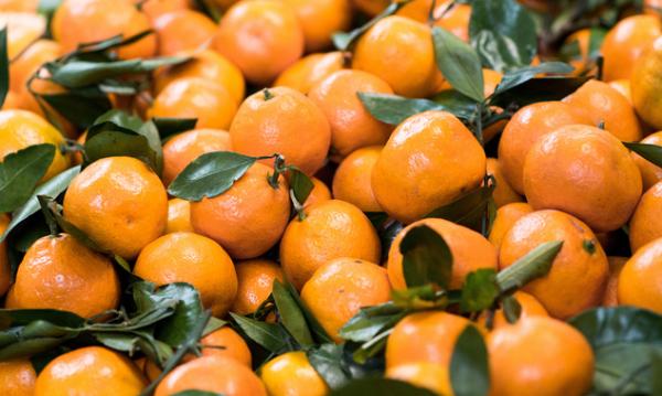 黄龙病不可治?研究人员已经在柑橘内找到了高效疗法