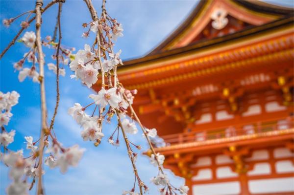 日本计划建立全球最大科研资助基金,过去20年顶级学术论文数量大幅下降