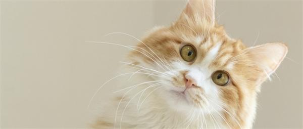 在猫咪确诊后 韩国首尔规定宠物也要进行新冠肺炎测试 如果是阳性 需要在家隔离14天