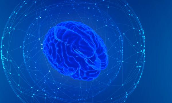 """""""十里不同脑"""":为了适应新环境 脑结构会自我微调"""