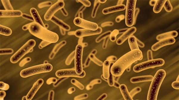全球首个跨种群基因目录!中国研究小组揭示汉族人皮肤微生物特征
