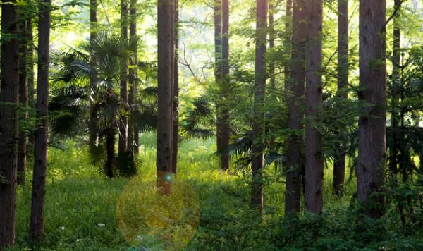 """新的研究发现了让森林害虫云杉树皮甲虫""""哑""""的方法"""