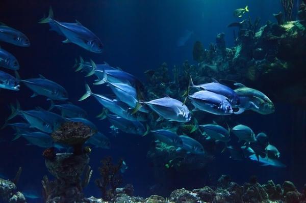 """鱼也是一个""""大碳排放者"""" 在深海中产生16%的碳"""