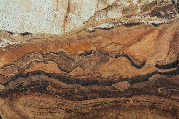 6.3亿年前的蘑菇化石!网友:还能吃吗?