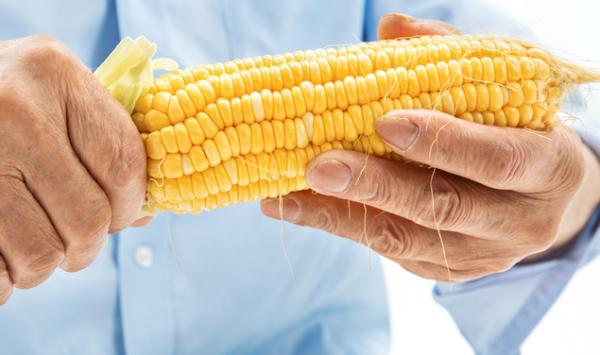 基因编辑解决粮食危机!科学家研究用CRISPR给玉米增产
