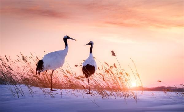 祝贺!海南师范大学喜提首篇Science,建议加强生物多样性保护
