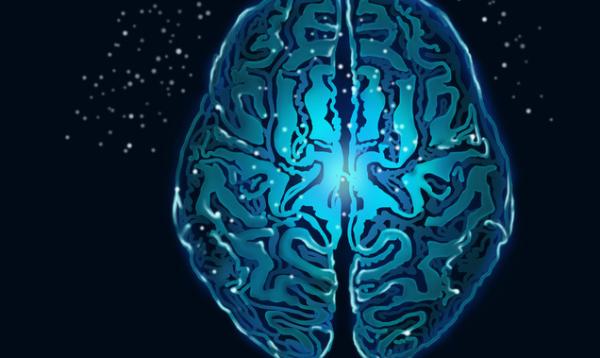 """《自然》子刊:大脑神经网络可缓慢重组,现在已经发现了它的""""开关"""""""