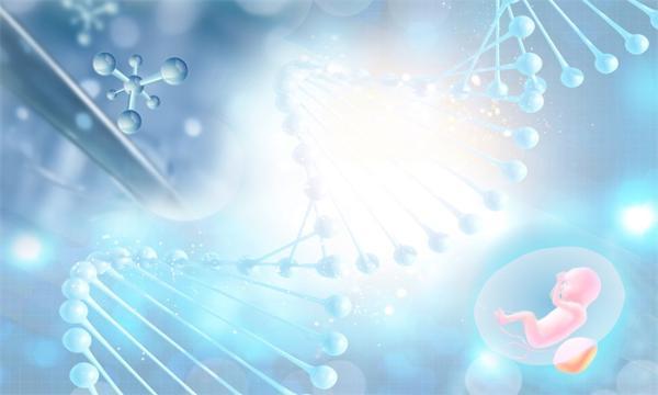 胎儿肠道的秘密:中国科学家首次揭示了反刍动物肠道微生物的起源和组成