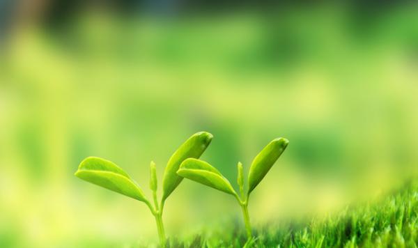 《美国科学院院刊》:新发现的植物特征可能解决亿万人的吃饭问题!