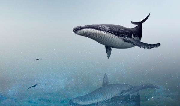 消灭癌症、白血病和神经疾病,科学家在鲸鱼基因中找到了答案