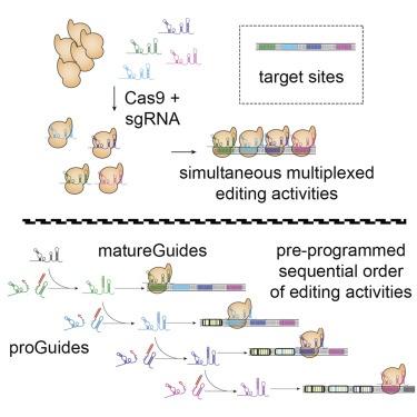 CRISPR还能用编程来跑:科学家成功编辑出可预编程的基因编辑系统