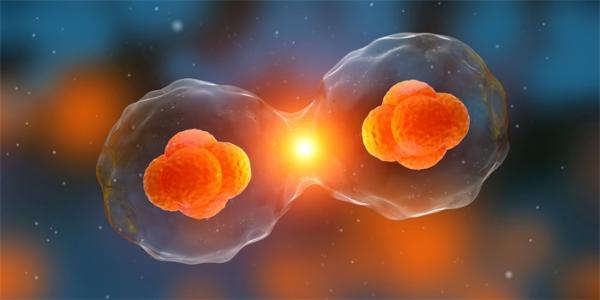 """研究:38亿年前的地球""""原始细胞"""",已有专门的气泡状隔间自发形成"""