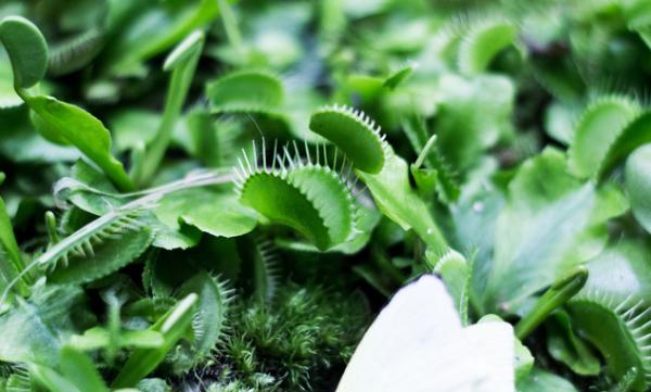万物皆有磁:科学家从植物中监测到磁场,未来或推动农业生产