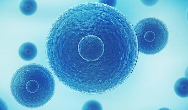 子问题《Cell》:改善新陈代谢 保持好身材可能从小细胞开始