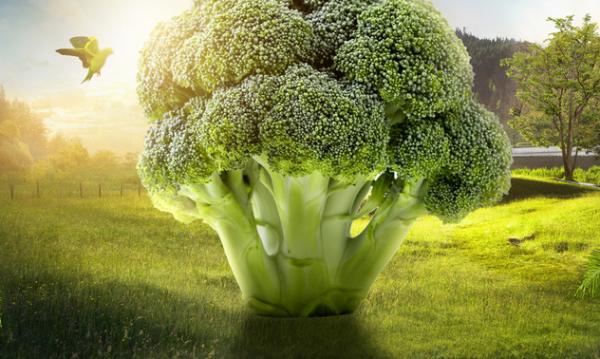 """不用""""金坷垃"""",微生物也能让蔬菜长得又高又壮"""