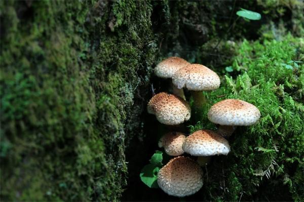 你吃的蘑菇还可以用来砌墙!科学家试图用蘑菇取代建筑混凝土