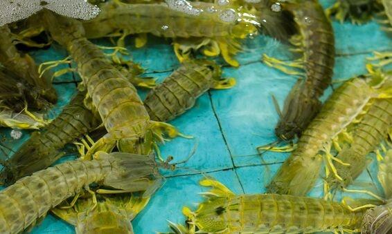 Phi Phi虾米也能抗癌!浙江海洋大学公布了口虾蛄多肽抗乳腺癌的发明授权