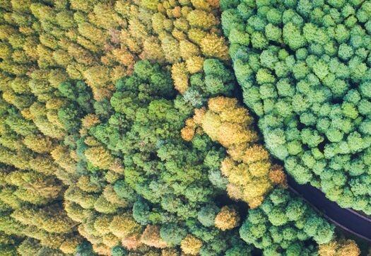 武汉理工大学公布智能沙漠植树机器人专利 提高沙漠植树效率 降低成本