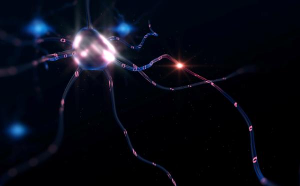 """""""欲言又止""""背后的秘密:科学家发现了负责取消计划行为的神经元"""