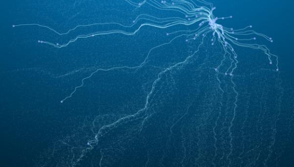 不止加密通信和超算,他们开发了一种新的量子传感器,与健康小鼠相比,                                                   <div><h3><a href=