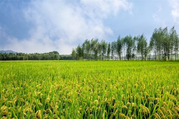污染地下水可用于农业施肥:德国科学家通过电化学方法将硝酸盐直接转化为氨气