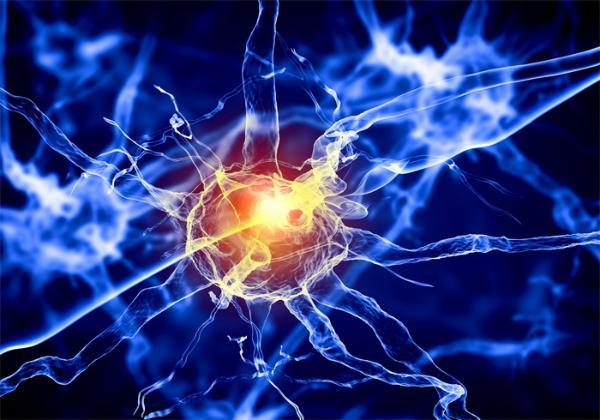 浙江脑科医学院开学第一个神经元!学习记忆过程中脑网络可塑性波动的机制分析