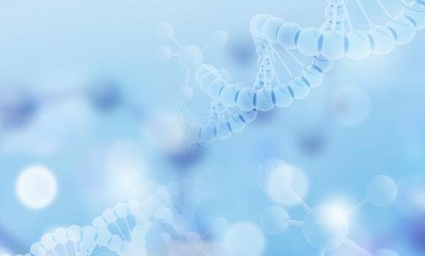 细胞亚问题:新的研究揭示了蛋白质聚集减缓基因表达以确保细胞活性的机制