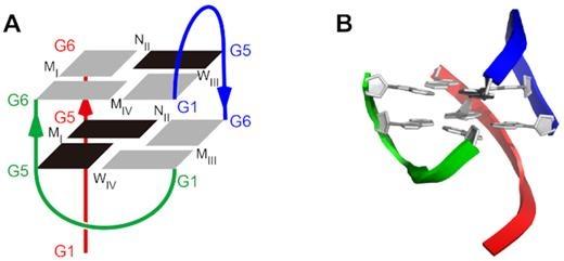 首次发现!中科院合肥研究院发现自我动态组装的三聚G-四链体结构