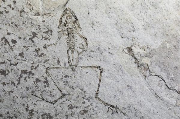 知地球之昨日:中国古生物学2020年度十大进展在宁发布