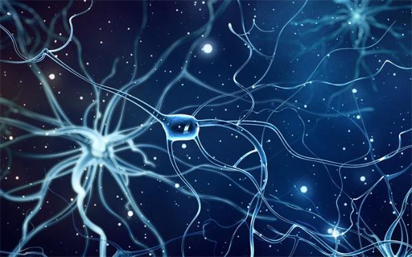 学累了刷手机也可以!研究表明 新的刺激可以重置与学习相关的神经回路 并有助于后续的学习