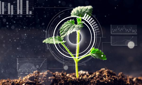 解决缺锌:找到植物吸收锌的关键蛋白质 可以增加食物中的锌含量