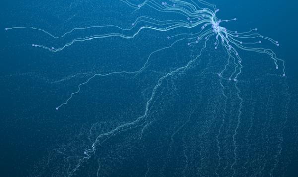 鸡蛋给的灵感!新型量子阵列可催生超低功耗器件研发