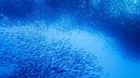 一种仿生鱼水下机器人驱动系统及驱动方法专利曝光:水下想走多快就走多快