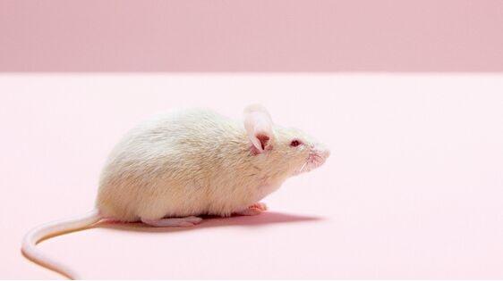 科学家首次揭示肥胖和抑郁症相伴发生的关键调控机制