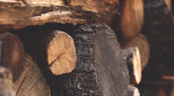 新事物!科学家用木材制造性能优异、环保无害的生物塑料