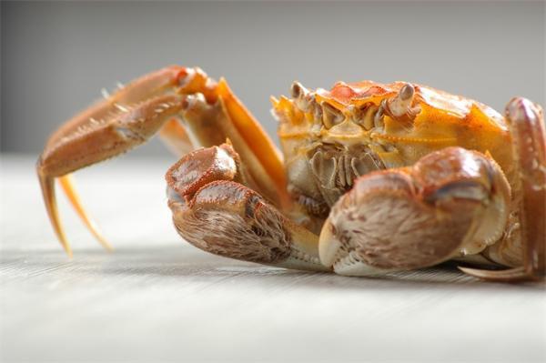灵感来自螃蟹!西安交大首次研发仿生关节外骨骼模型,采用优化算法设计