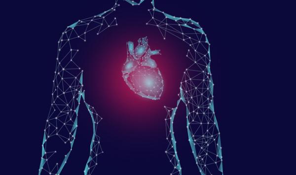 研究揭示男女在心脏病发作方面的差异,将可用于制定个性疗法