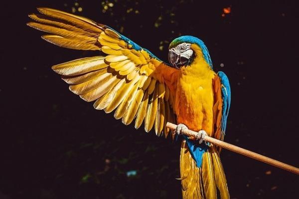 考古发现千年前的可怜鹦鹉:千里迢迢到达智利后,被做成了木乃伊