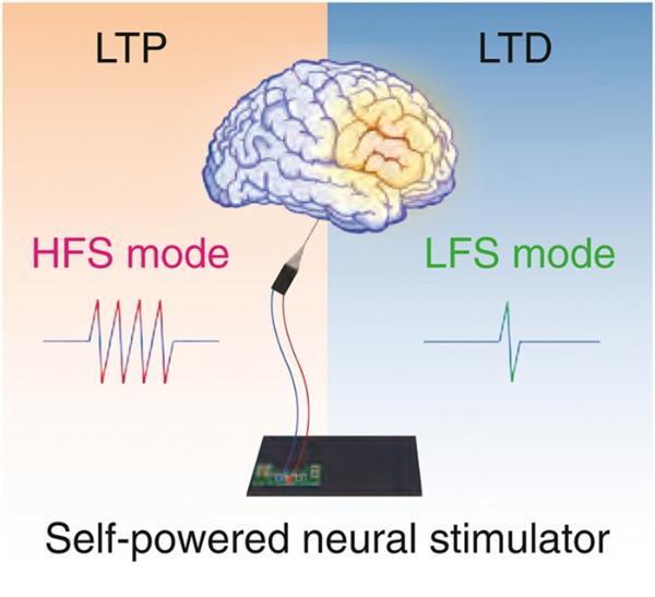 中科院团队制备人体自供电神经刺激器,有望解决阿兹海默等脑部疾病