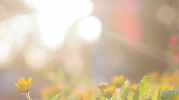 如果你不能种植太阳 那就收集它!南洋理工大学研发阳光收集器