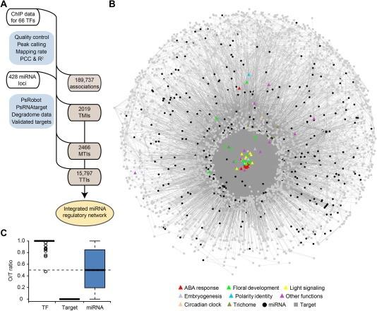 发现植物miRNA的独特作用:北大团队构建拟南芥miRNA调控网络