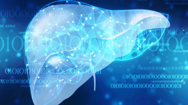 超2亿中国人脂肪肝!科学家找到了调节肝脏中有害脂质的基因
