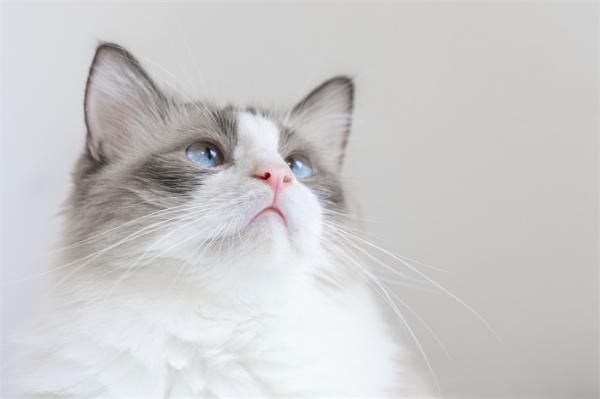 风险未知!美法首次在猫狗身上发现新冠变异毒株,宠物出现心脏异常