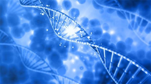 快速可靠!天津大学团队验证了一种新的DNA数据存储方法 它可以在人工染色体中存储图片和视频