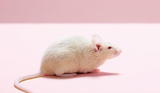 堪忧!科学家发现塑料微粒可以穿透动物胎盘 幼鼠体重减轻7%