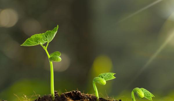 """子问题《自然》:科学家发现在高温下防止植物""""不育""""的关键蛋白质"""