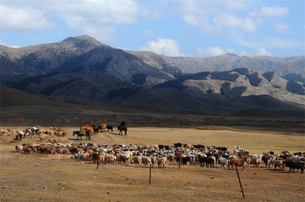 牧民人在家中坐,放牛?——用手机放!