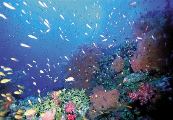 水体富营养化导致藻类泛滥怎么办?种植更多的海藻!