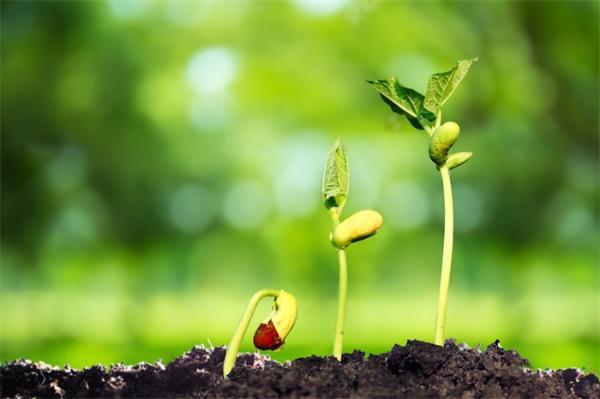 """远离有害化肥!一种神奇真菌被发现,可""""操纵""""细菌使土壤养分更丰富"""