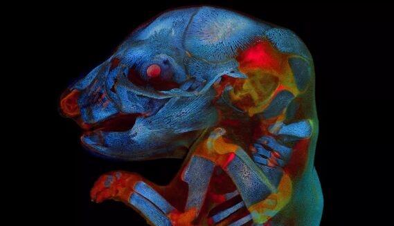 像外星怪物!21天大鼠胚胎照获科学摄影奖:眼冒红光,身体散发蓝色幽光
